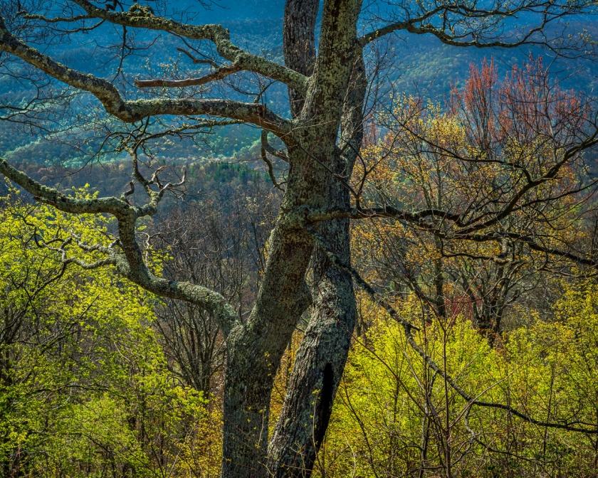 Spring Hillside No.3 - Blue Ridge Parkway, NC — © jjraia